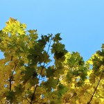 2012-10-20-img_1503