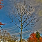 2012-11-10-hdr_2038