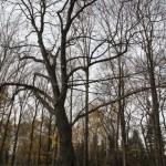 2012-11-10-img_1842