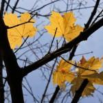 2012-11-10-img_1879